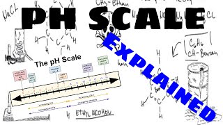 The pH Scale Explained