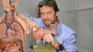Hepatic portal vein (anatomy)