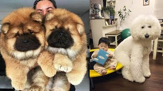 THE MOST BEAUTIFUL DOG BREEDS In The World