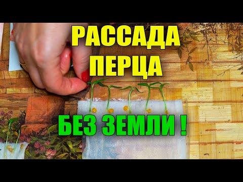 ВЫРАЩИВАНИЕ РАССАДЫ ПЕРЦА БЕЗ ЗЕМЛИ НА БУМАГЕ!