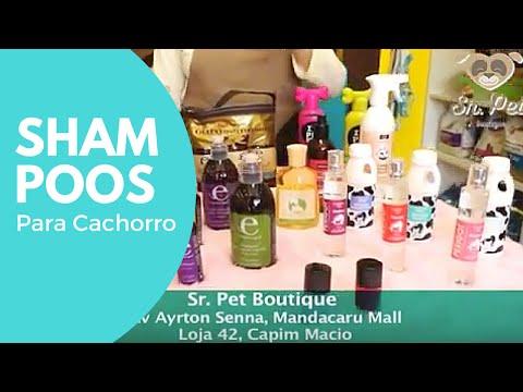 Dicas para escolher o melhor Shampoo para o seu pet