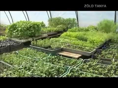 Parazitaellenes gyógynövények és fűszerek