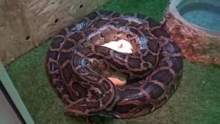 В Минераловодском округе нашествие змей