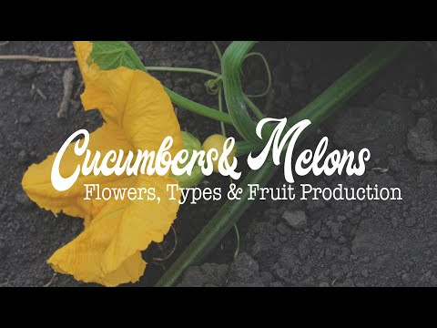 , title : 'Cucumbers & Melons: Flowers, Types and Fruit Production