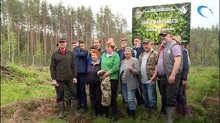 В Парфинском районе прошел «Всероссийский День посадки леса»