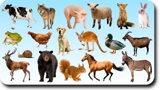 Learning Animals Names and Sounds for kids with More Finger Family Nursery Song for Children