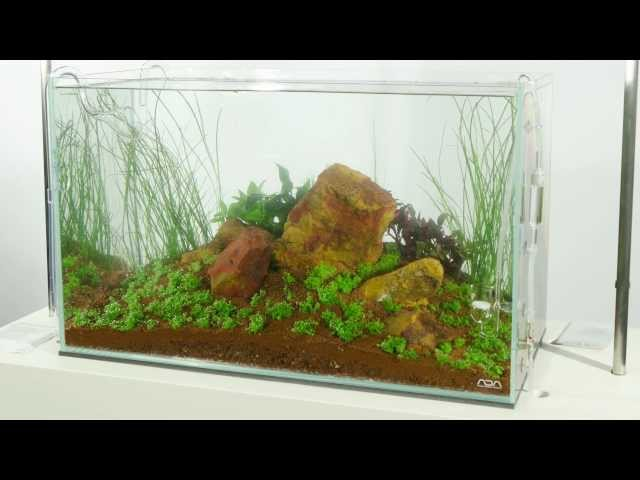 'Five Stones' Aquascape by James Findley - Time-Lapse Preview