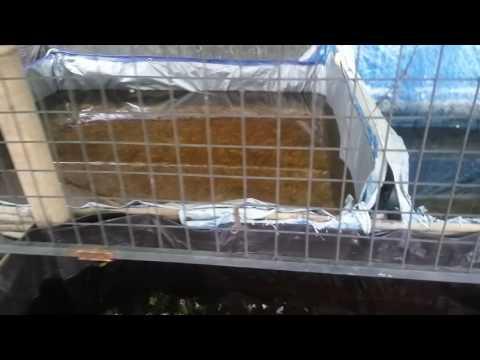 Video Budidaya ikan Guppy lahan sempit