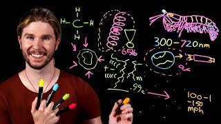 Earth's Most Complicated Eyes | Because Science Live