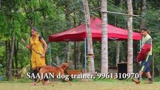 Self Protection Dogs For Sale....Saajan Dog Training School At Pala.9961310970