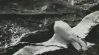 Anni Frid Lyngstad (Abba)  Aven en Blomma  1996  (Even a flower)