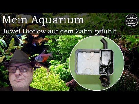 Juwel Bioflow auf dem Zahn gefühlt   Mein Aquarium 78
