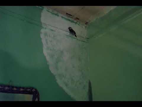 Что означает #примета, когда #птица в #дом #залетела