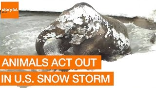 Animals Act Out in U.S. Snow Storm.