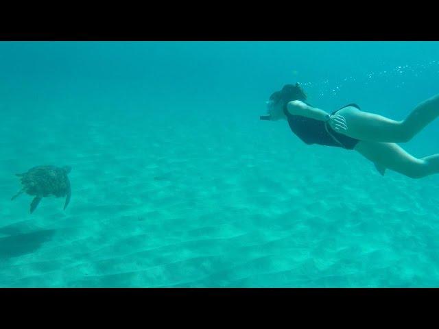 Curacao Snorkel Girl Turtle Festival Encounter Playa Piskado Free-Diving Snokeling