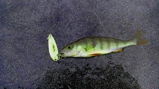 Рыбалка на озере тигода новгородская область