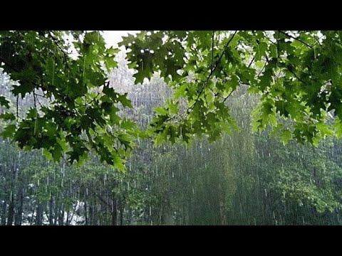 Дождь, ливень для глубокого сна 10 часов.  Rain, downpour for deep sleep.  Relax  Rain 10 hours.
