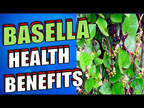, title : 'Amazing Health Benefits of Basella or Alugbati, Malabar Spinach, Indian Spinach & Vine Spinach'