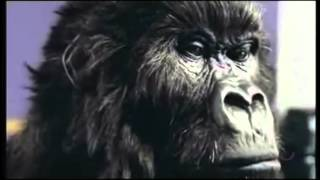 Dairy Milk Gorilla - Suddenly (Angry Anderson)