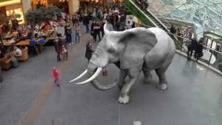 Augmented Reality Zoo