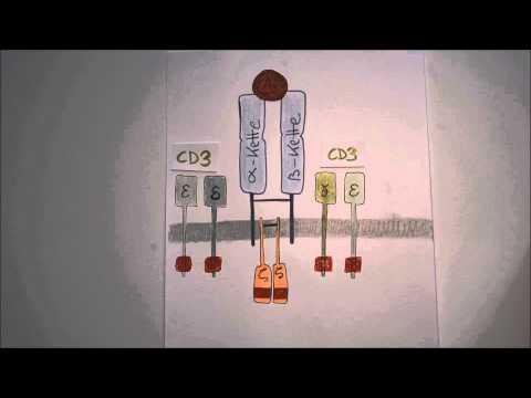 Karotten können bei Diabetes mellitus Typ 2 verwendet werden,