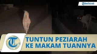 Viral Video Seekor Anjing Tuntun Peziarah ke Makam Tuannya yang Sudah Meninggal, Begini Kisahnya