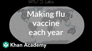 Making flu vaccine each year | Infectious diseases | Health & Medicine | Khan Academy