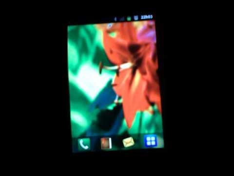 Video of Beija Flor Wallpaper