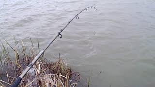 Теплый канал рыбалка в волгодонске