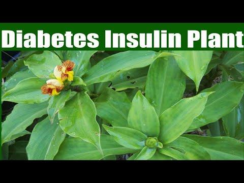 Gebäck für Diabetiker aus Buchweizenmehl