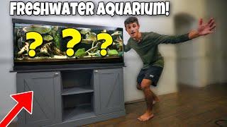 BUYING My DREAM Freshwater Exotic FISH AQUARIUM!!