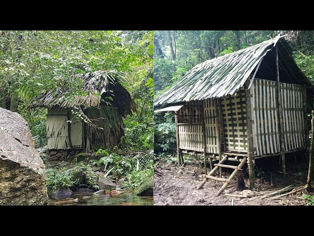 Six months of survival in the tropical rainforest