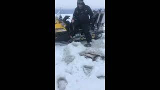 Где ловят налима на рыбинском водохранилище