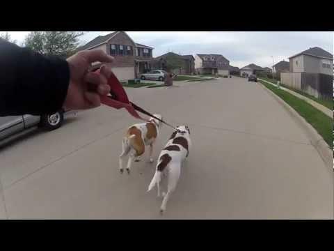 Sullo skateboard tirato dai suoi cani
