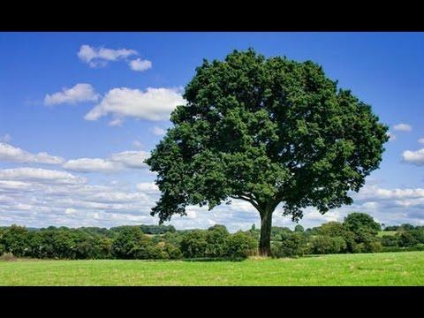 Seasonal Changes In Trees