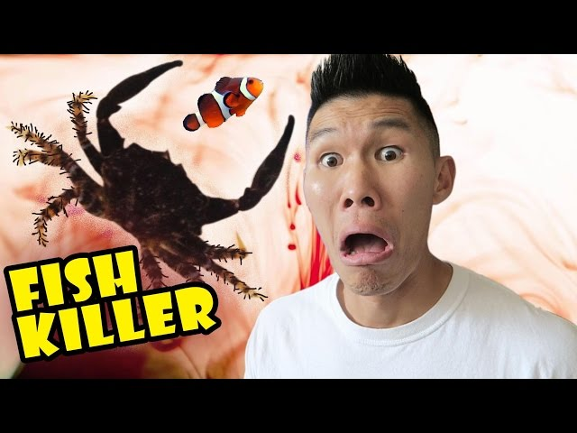 FISH KILLER CRAB CAUSES AQUARIUM DISASTER - Life After College: Ep. 504