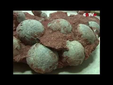 Fossilized Dinosaur Eggs Unearthed in S China