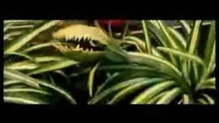 spider plant man part 1