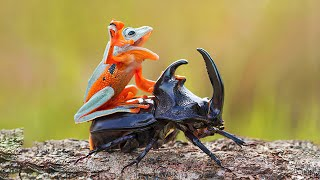 21 Amazing Animal Moments You've Never Seen Before