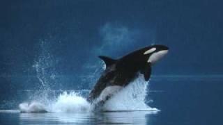 ~Killer Whales~
