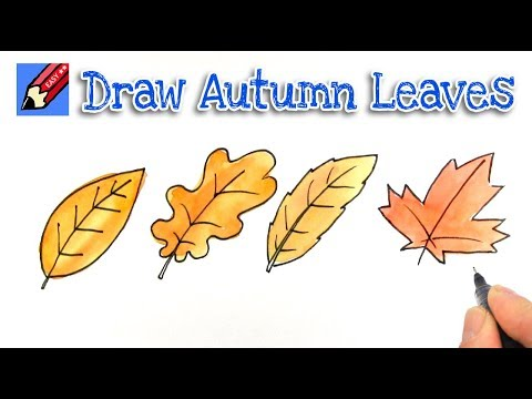 How To Draw Autumn Fall Leaves Shoo Rayner Author