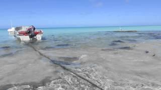 Giant Fish Feeding Fenzy | Giant Trevally Fish
