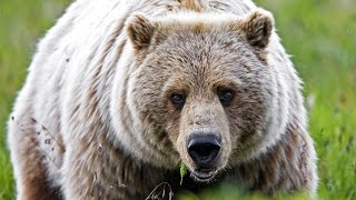 5 Practical Tips to Avoid a BEAR ATTACK