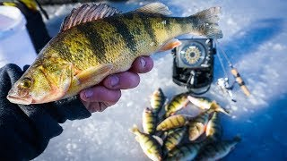 INSANE Perch Ice Fishing | Winnebago (Wisconsin)