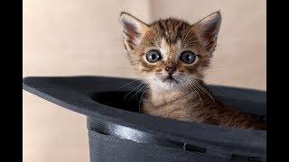 Милые котята | Подборка видео приколов про смешных котят (Часть 2)