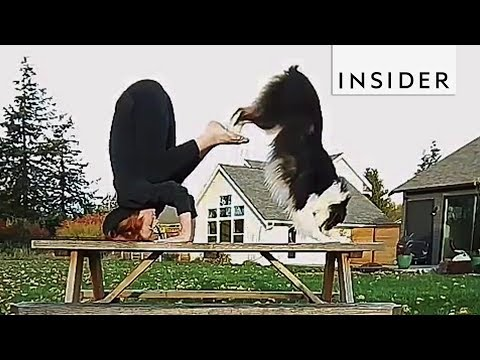 This Yoga Practicing Dog is Better Than You