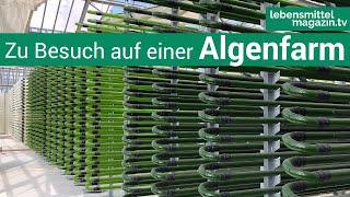 Hier wachsen Algen zum Essen: Besuch einer Algenfarm in Sachsen-Anhalt