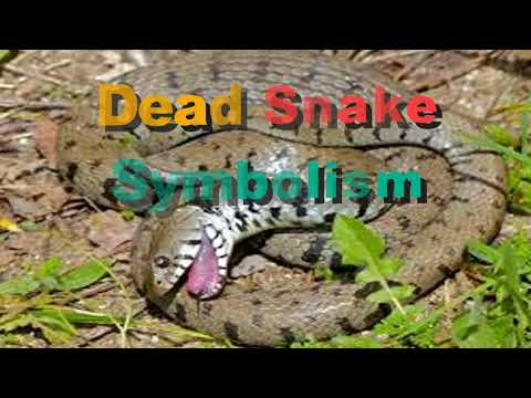 dead snake symbolism | Dream Interpretation & Dream Meanings