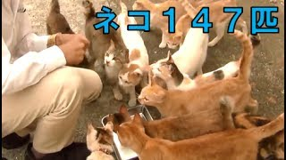 ネコうじゃうじゃの島、愛媛県青島の旅