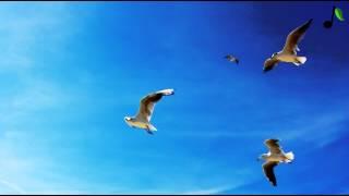 Avidya Feat Alexander Asp - Shine For Me (Original Mix)